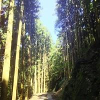 樫谷棚田の秋ー1