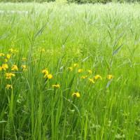 初夏の自然公園をめぐり花。緑が濃くなっています。