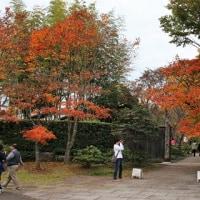 2015年の秋~冬写真ファイルから