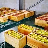 りんご豆知識
