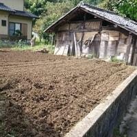 白菜・キャベツの植え付け!