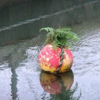 流れの中に植物