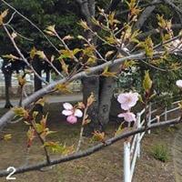 関東平野中央部 春は隣り