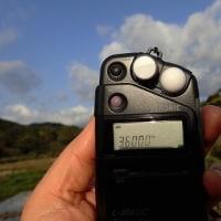 24日朝、水田地帯で行動:コウノトリJ0067の観察と滞在記録更新