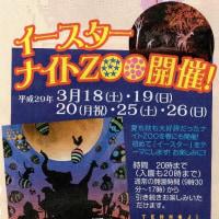 天王寺動物園・イースターナイトZOO開催中です!
