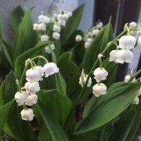 花が咲く!夏が来る!お昼ご飯で季節を感じよう!