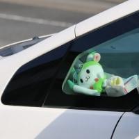 「ふっかちゃん」ご乗車中
