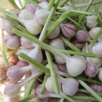 6月の美しい野菜。