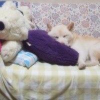 こんにちは~♪(*^o^*)