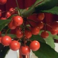 シャンソン歌手リリ・レイLILI LEY   シャンソンブログの写真