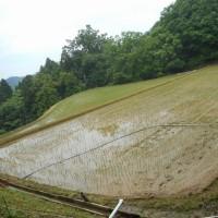 ほぼ一か月ぶりの、雨・・・でも、9mmと、お湿り程度。山間の田圃は、まだまだ水不足!早く本格的な雨が欲しい(切実な願い)