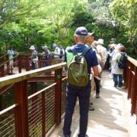 ソラードから見た樹木たち