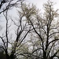樹木や雑草が春らしく見えてきた武蔵野公園です その4