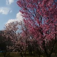 もう 春 よね!