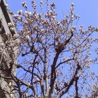 春が戻って一安心