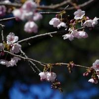 上野千鶴子さんの的言、いつか必ず来る「おひとりさまの老後」、知っておきたい心構えと準備、遅ればせながら多々学び・・。