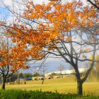 デジブック 『稲荷公園の晩秋』
