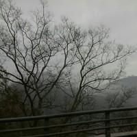 久し振りの雨らしい雨!!