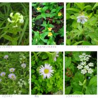 草花を撮る・北から南へ4 ー道南-