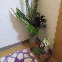緑の玄関花☆人参の葉