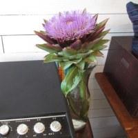 アーティチョークの花