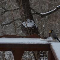 雪の蓼科でトランプ氏と相撲の話題でコーヒーを味わう。