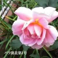 今咲いている花