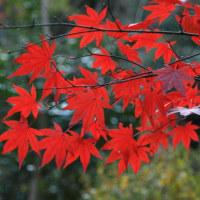 鎌倉の紅葉を追って