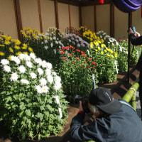 マッキーの『四季を楽しむ』: 新宿御苑の菊花展