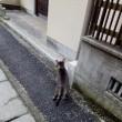 猫散歩(みなみの失敗談)