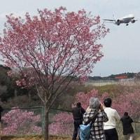 やっぱり春は桜景