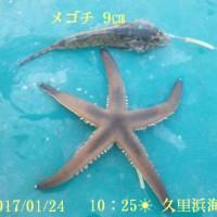 笑転爺の釣行記 1月24日☀ 久里浜・長瀬