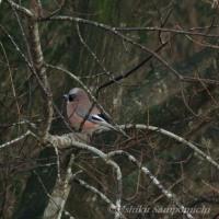 冬鳥が集結を始めました