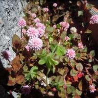 草花が可愛い季節です (´∀`艸)♡