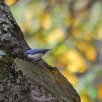 森の小鳥たちと遊ぶ