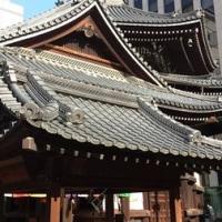 初夏の京都は朝が良い