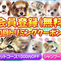 小さなトイプードルの女の子セール価格で販売中/福島県福島市、郡山市、南相馬市で子犬をお探しなら