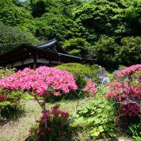 『皐月』 旧安田別荘