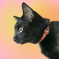 黒猫のレオ君 横顔で