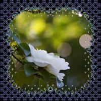 12月の花回廊・・・