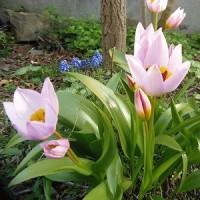 お花がきれい!