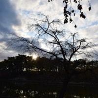 晩秋の千葉公園