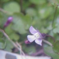 小さな花と、めんまの合図。