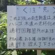 登山道注意情報(南岳新道)20170721