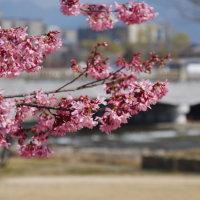 「そうだ、京都行こう」なシーズンが来る(^^;)
