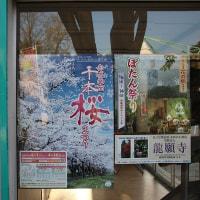2017年04月16日 赤城南面千本桜へ行くつもりでしたが・・・