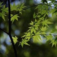 明治神宮御苑に新緑を見にいってきました。