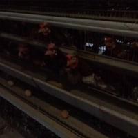 日向渓谷ます釣り場で渓流釣り→BBQ→坂本養鶏で卵拾い体験