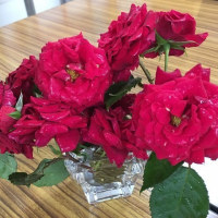 楽習館はバラ祭り