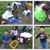冬野菜の植付けと稲刈り